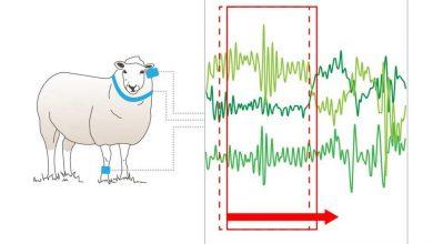 تصویر از پیشبینی زلزله با تحلیل رفتار حیوانات